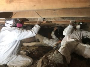 mold-removal-restoration-remediation