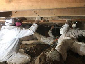 mold-removal-restoration-remediation